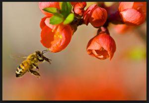 bee love pixlr